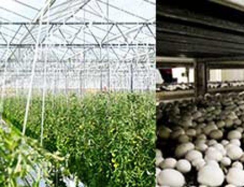 Hodowla roślin i grzybów